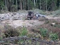 Защитники Химкинского леса подали иск против строителей трассы