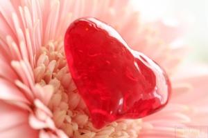 В День святого Валентина власти Великобритании напомнили об экологии